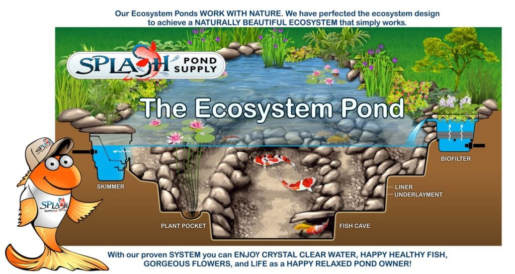 How does a pond ecosystem work?