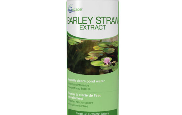 Does Barley Work for Treating Algae?