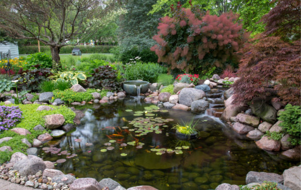 3 Steps to Get Rid of Green Pond Water