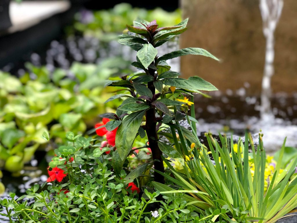 Floating Island with Impatiens