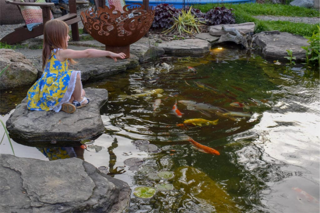 Relaxing Ecosystem Pond