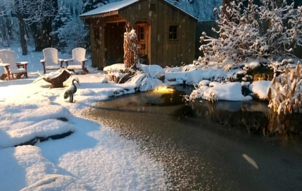 4 Tips for Fall & Winter Pond Care